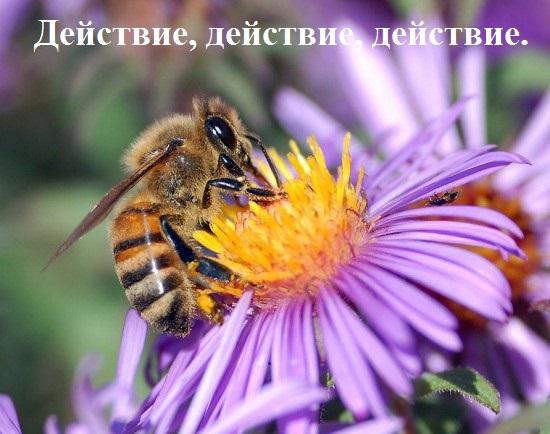 Пчела на синем цветке