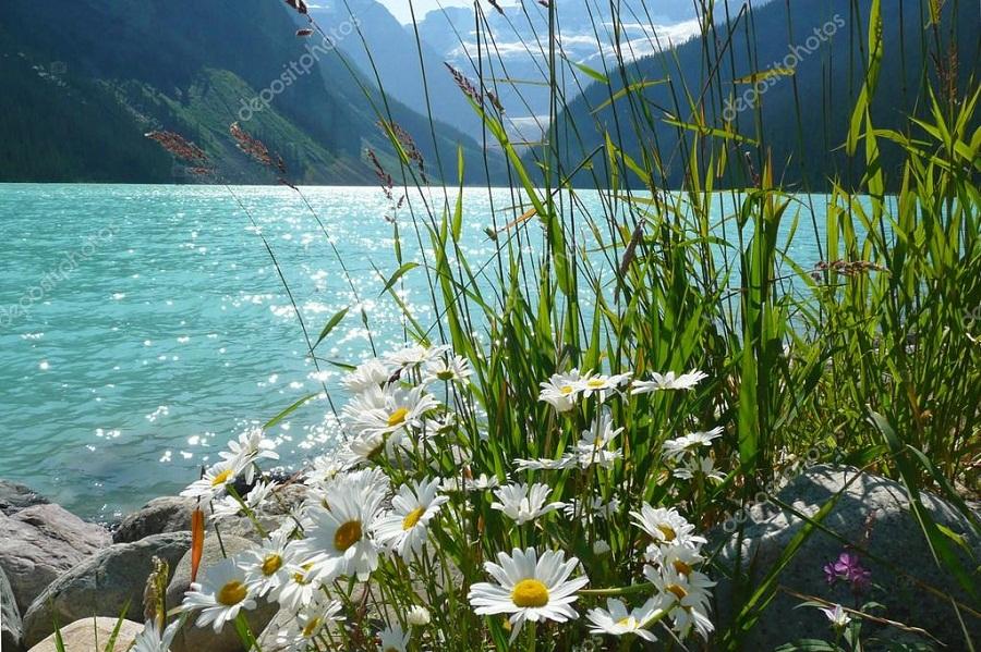 ромашкм и озеро