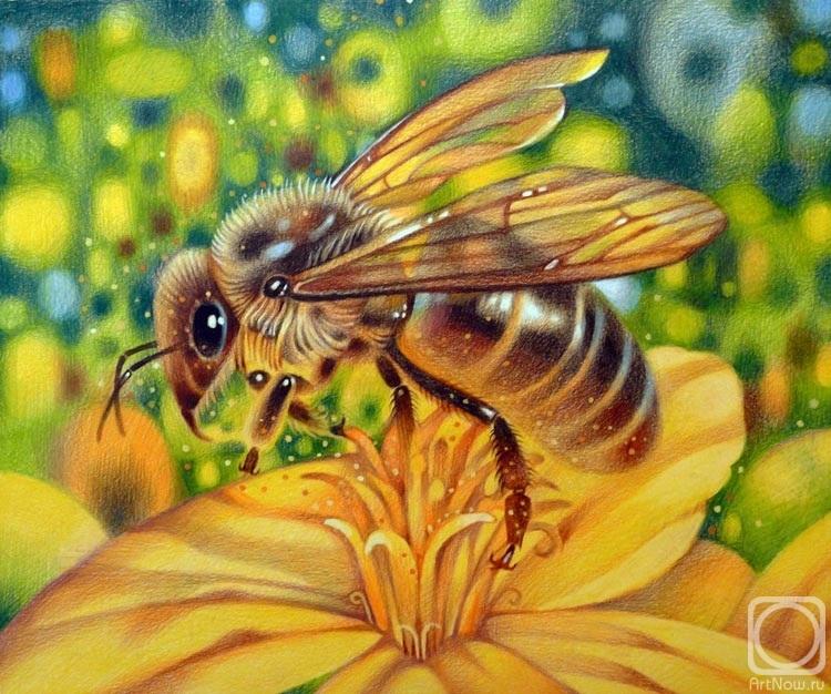 Ася Пчёлка