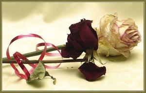 сухая роза