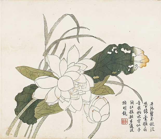 lotos китай