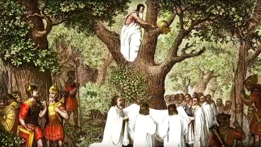 Священный дуб друидов