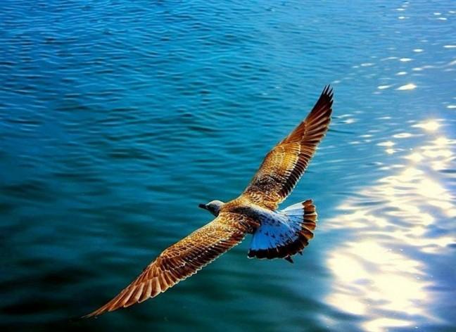 Птица над морем